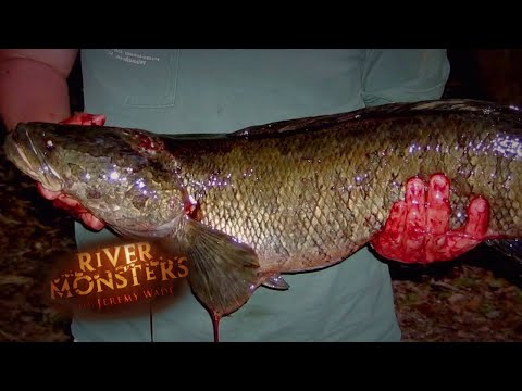 Hooking An AGGRESSIVE Snakehead! | SNAKEHEAD | River Monsters