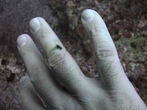 Scuba diving and Green blood