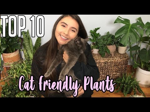 Best Houseplants That Are Pet Friendly To Indoor Cats