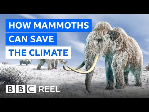 Why resurrecting the woolly mammoth could rescue our planet - BBC REEL