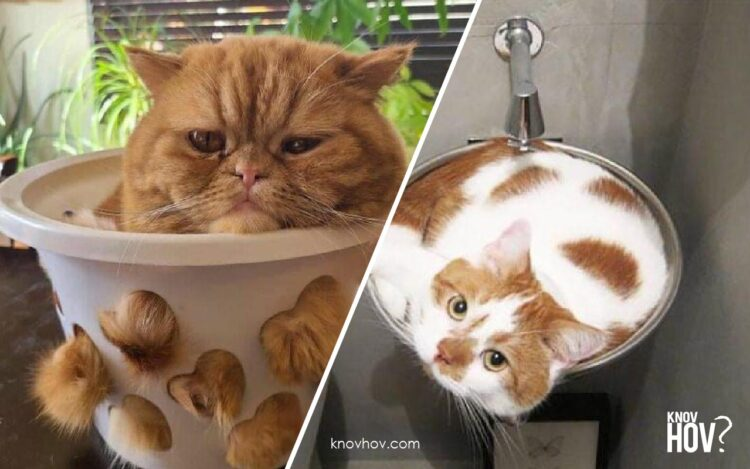 Cute Cat Moments: 16 Photos of Cats in Places They Shouldn't be