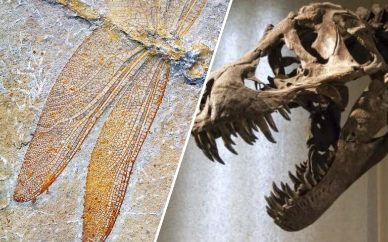 A Dragonfly Fossil was Discovered, which Once Roamed with Dinosaurs in Jurassic Era