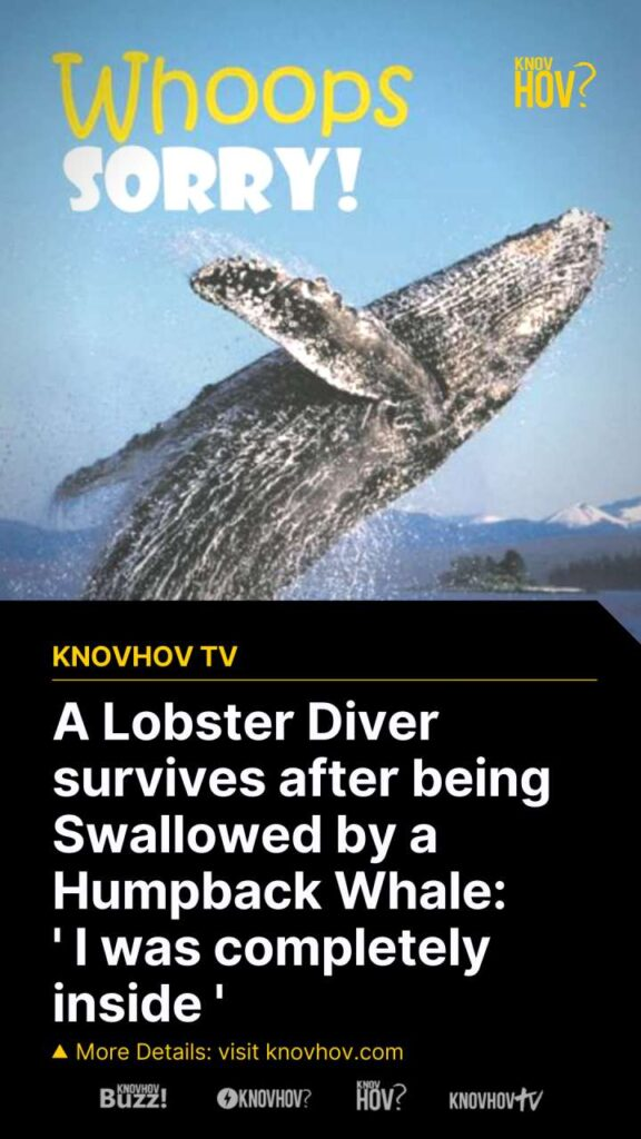 A Lobster Diver Survives after being Swallowed by a Humpback Whale: 'I was completely inside'
