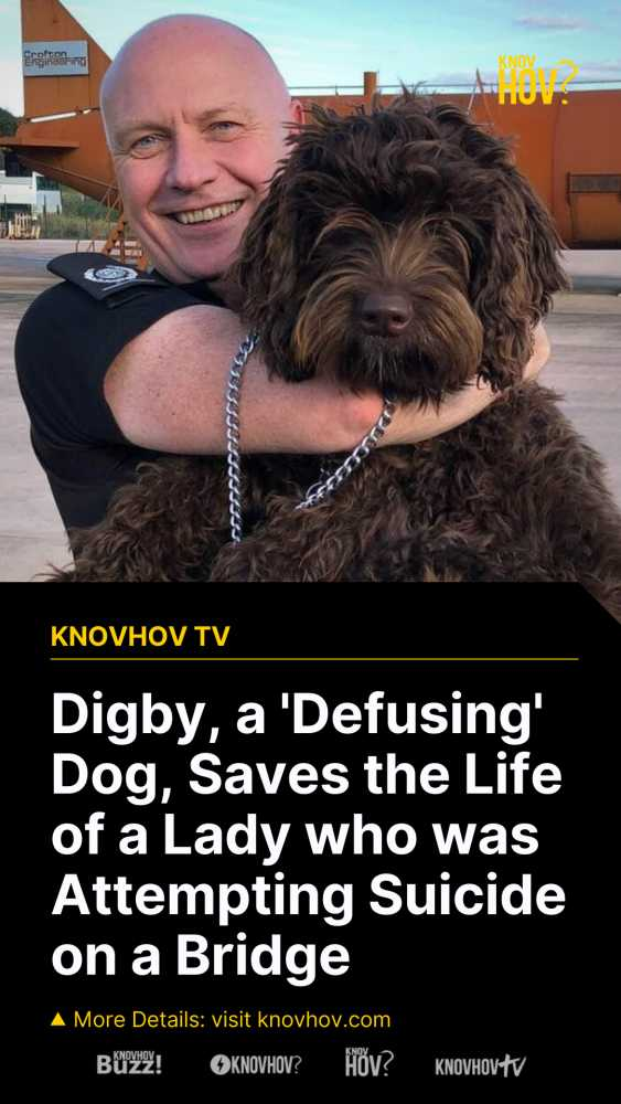 Digby, the 'Defusing' Dog, Saves the Life of a Lady who was Attempting Suicide on a Bridge