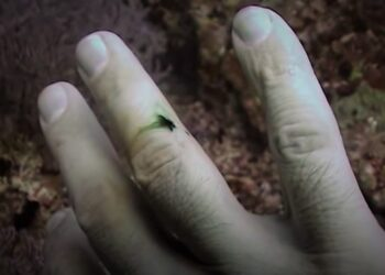 Why Blood appears Green Underwater & How Colors Change with the Depth Underwater