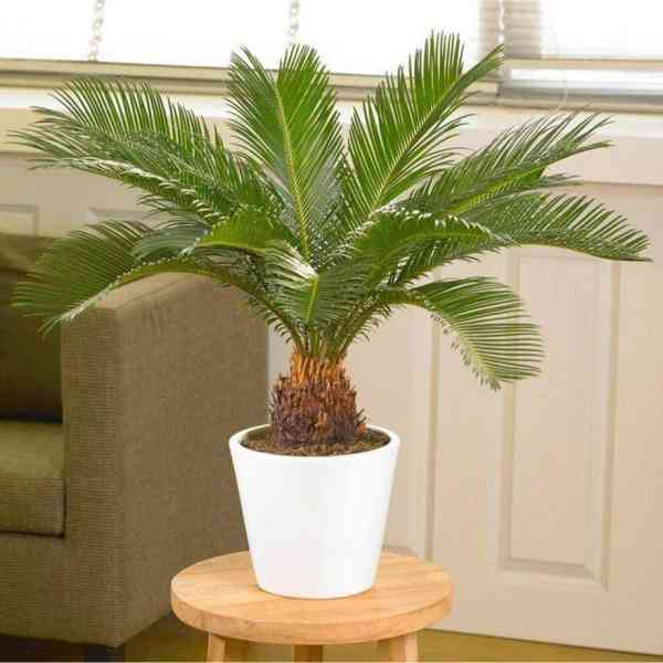 10 Indoor plants which are toxic and not safe for Pets & Cats