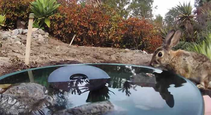 A woman installed a camera in a water fountain in her yard, which captured photos of regular visitors