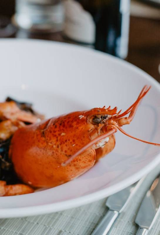 Boiling Lobsters Alive will be Prohibited under new UK government legislation