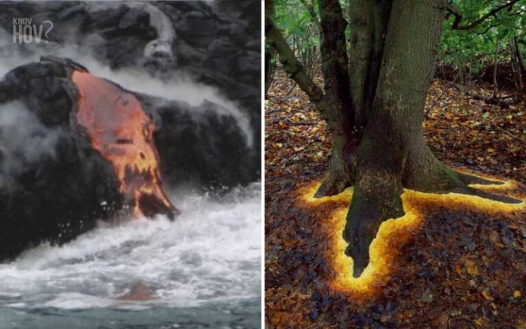 22 Scientific Photos that are Hard to believe but are indeed Real