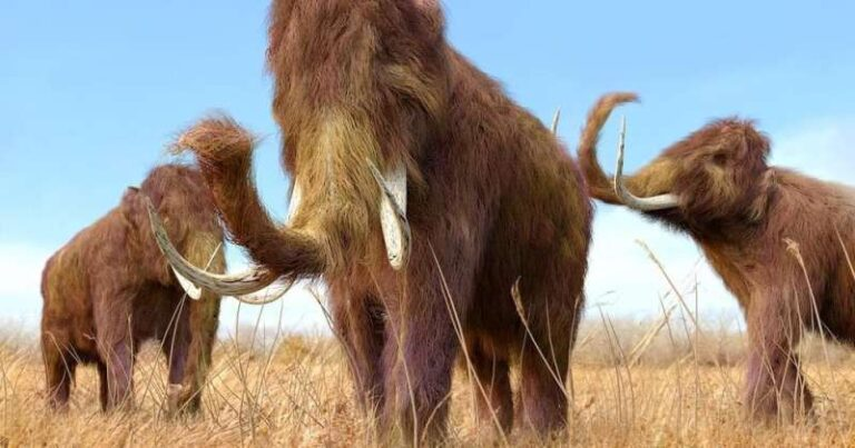 A Firm has Raised $15 million to Bring back Woolly Mammoths from Extinction