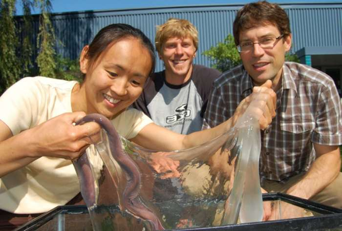 The Slime releasing by Hagfish in a threat, Expands by 10,000 times in less than half a second
